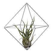 Cube Medium