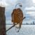 Metalbird - Arend