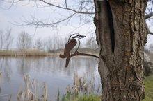 Metalbird-kookaburra